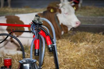 Milking machine on dairy farm