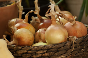 beautiful fresh golden onions in a basket