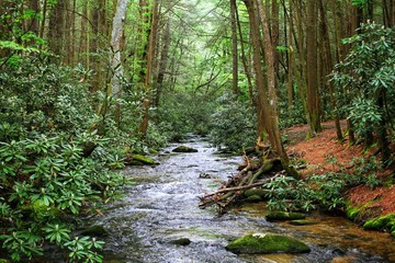 River in the woods.