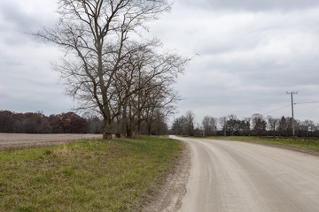 Dirt road with bare trees