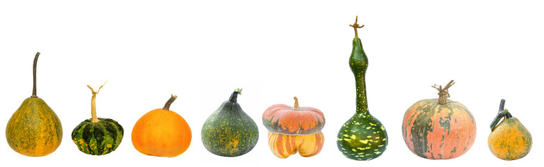 Set of decorative pumpkins isolated on a white background