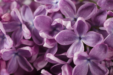 Keuken foto achterwand Lavendel Macro shot of bright violet lilac flowers. Abstract romantic floral background.
