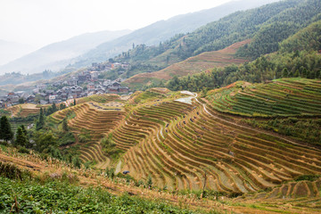 The Terraced fields of China