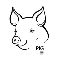 pig head portrait, isolated