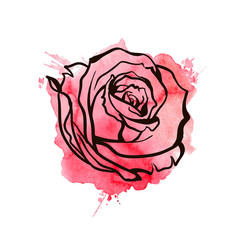 flower, red roses, hand drawn illustration.