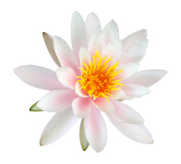 Pink Lotus flower isolated on white background. Clipping path included.