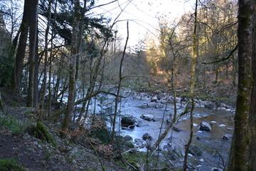река в природном парке Тэй Форест в Шотландии