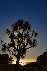 Sun setting behind a cabbage tree, west coast, New Zealand