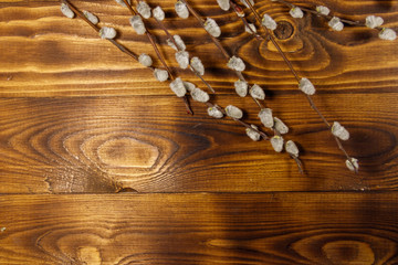 Pussy willow twigs on wooden background. Top view, copy space