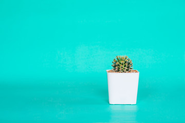 Cactus in white pot on green background.