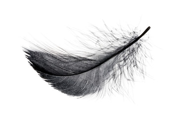 Single black floating feather on white background. Wall mural