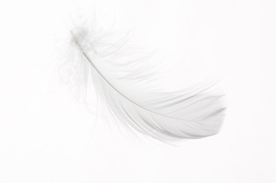 Detail of a delicate white feather