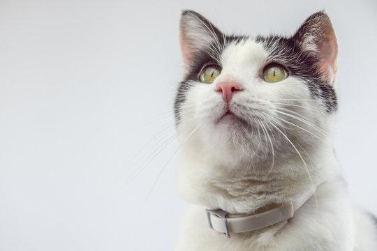 Katze Floh Halsband