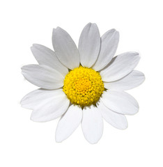 A daisy cut out - Stock image