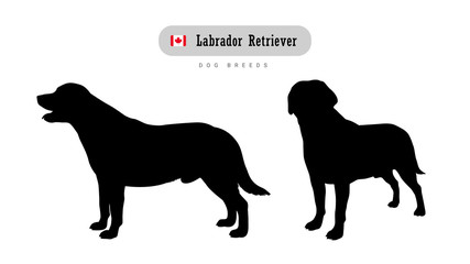 Dog breed Labrador retriever. Side and front view silhouettes isolated on white background.