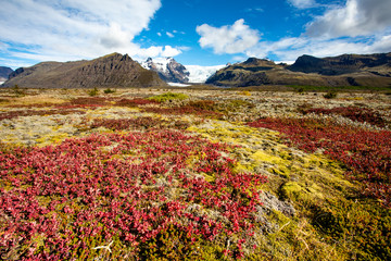 Beautiful blooming mountain landscape with blue sky and clouds. Europe. Iceland