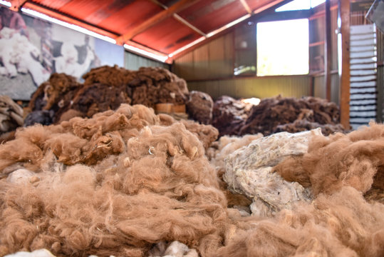 Arequipa, Peru - October 7, 2018: Piles of raw alpaca wool awaiting processing for use in the textile industry