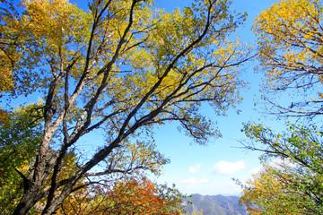 Color trees under blue sky background