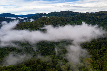 Mist and cloud forming over a dense, tropical rainforest in Thailand