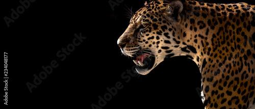 Wall mural cheetah, leopard, jaguar
