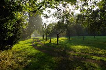 Traumhafte Abenstimmung auf Wiese mit Obstbäumen
