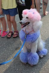 Pink poodle at street festival