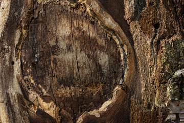 colorful texture of old tree beautiful pattern small thin cracks sunshine natural background