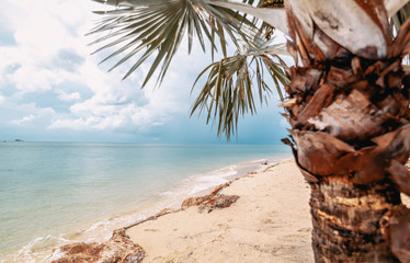 Fototapete - beautiful tropical landscape, palm tree on the background of the turquoise sea and sky with clouds, the background and texture of tourism and travel