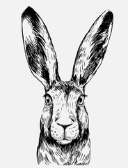 Sketch of hare. Hand drawn illustration converted to vector