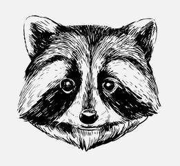 Sketch of racoon. Hand drawn illustration converted to vector