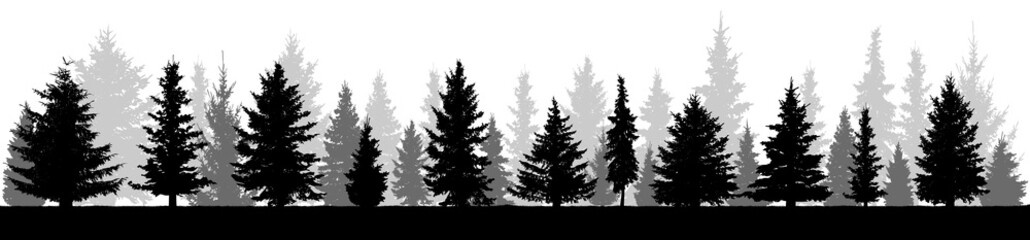 Printed roller blinds Gray traffic Forest fir trees silhouette. Coniferous spruce. Isolated on white background