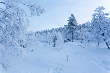 lapland landscape during winter in Finland