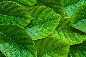 Green leaf background and space for text