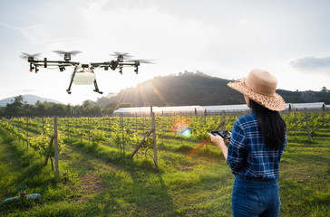 Woman farmer use smart phone control agriculture drone fly to sprayed fertilizer on the grape fields, Smart farm 4.0 concept