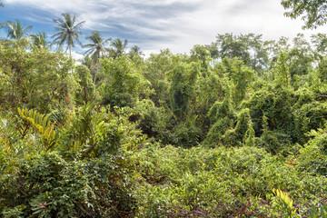 Scenic view of impassable jungle in summer