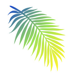 Tropical palm leaf closeup isolated on white background