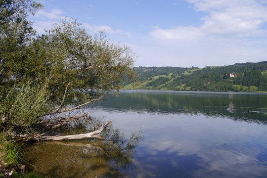 Ufer mit Totholz am Großen Alpsee