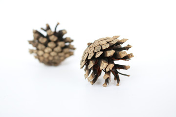 Two pine cones on a white background. Isolated objects.