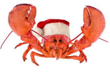 Poster Coquillage Funny lobster for Christmas, isolated on white background.