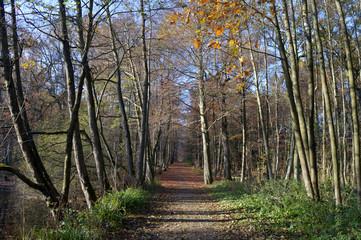 Weg durch den Wald im Herst