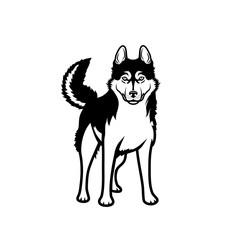 Siberian Husky dog - isolated