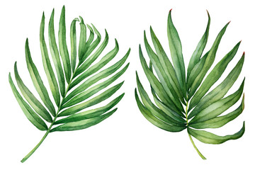 Set of exotic tropical green palm leaves. Watercolor hand drawn painting illustration isolated on a white background.