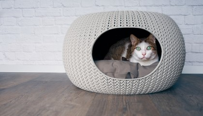 Cute tabby cat lying in a cat cave and looking curious to the camera.