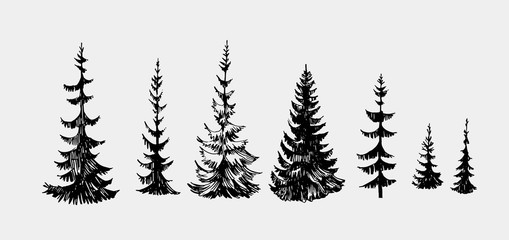 Set of fir trees. Hand drawn illustration converted to vector