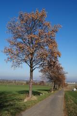 Herbstalee