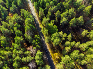 Beautiful road through evergreen pine forest on bright sunny day. Eco tourism and travel concept. Aerial drone virew