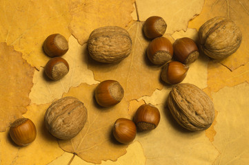 Hazelnuts and walnuts with autumn leaves