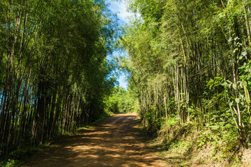 Path to bamboo forest , Walkway