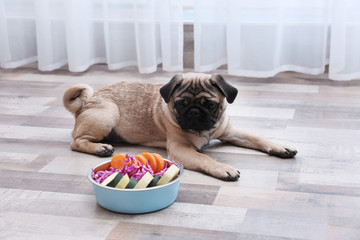 Cute little pug lying near bowl with organic food at home