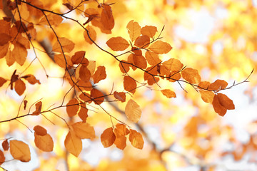 Tree twigs with autumn leaves on blurred background
